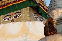 Swayambhunath temple, Kathmandu | Temple de Swayambhunath, Katmandou