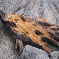 Wind-Carved Wood