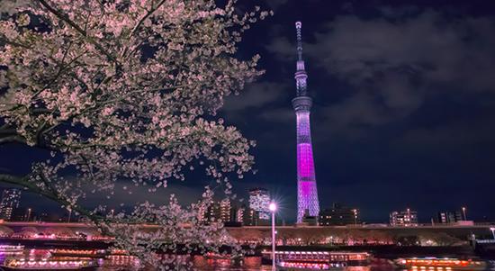 桜img002