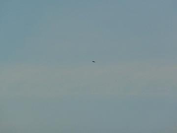 Ufo boven Rotterdam