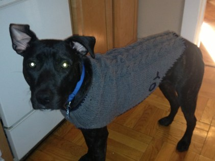 Dog Sweater Crochet Pattern Charm Hour A Very Pit Bull Sweater