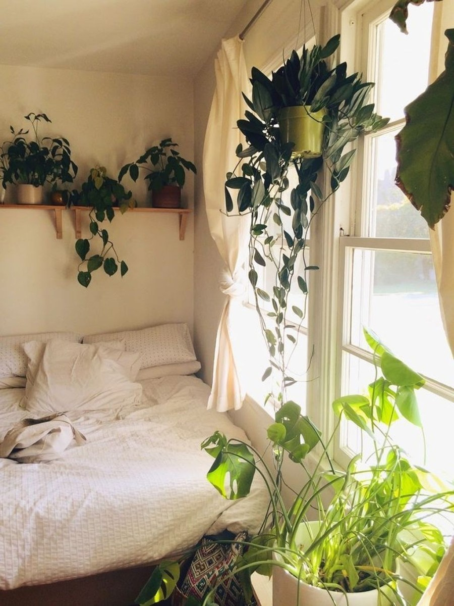 Beautiful Plant Decors For Your House 05
