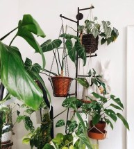 Beautiful Plant Decors For Your House 10
