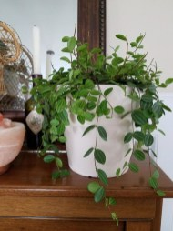Beautiful Plant Decors For Your House 12