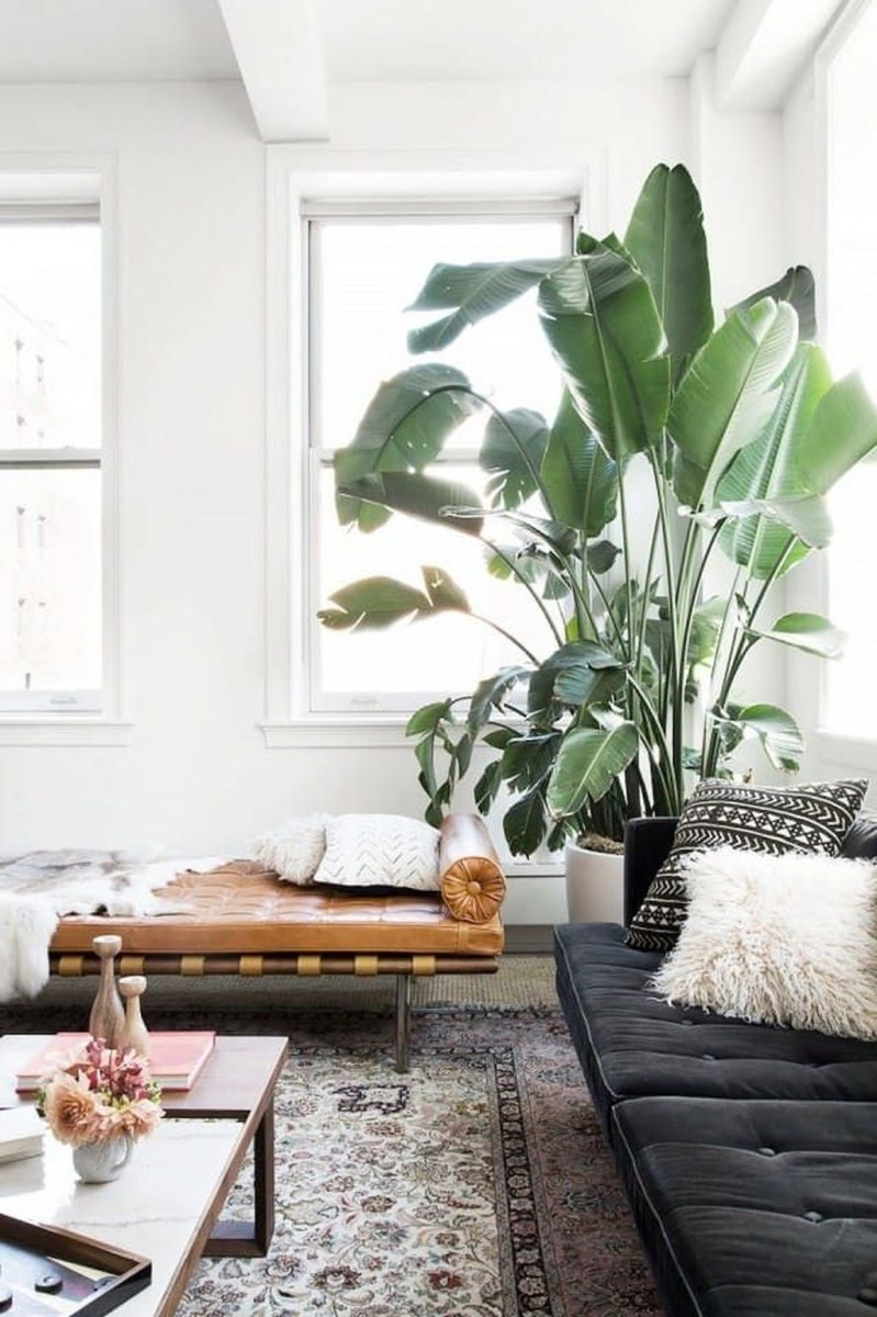 Beautiful Plant Decors For Your House 23