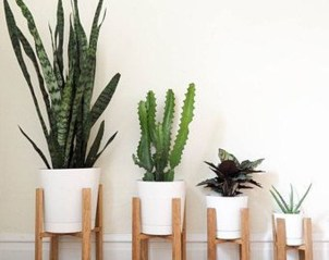 Beautiful Plant Decors For Your House 27
