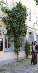 Beautiful Facades With Vines And Climbers 08