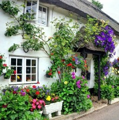 Beautiful Facades With Vines And Climbers 17
