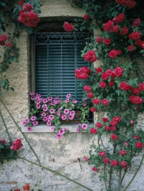 Beautiful Facades With Vines And Climbers 23