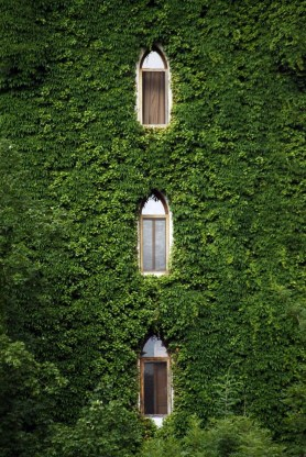 Beautiful Facades With Vines And Climbers 41