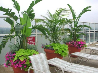 Cute Palm Gardening Ideas For Front Yard 02