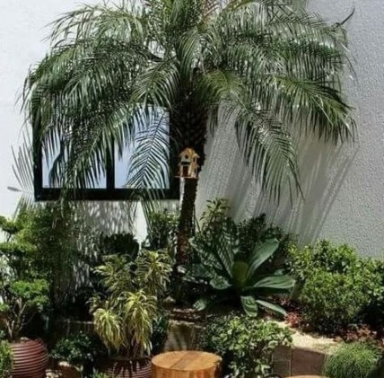 Cute Palm Gardening Ideas For Front Yard 16
