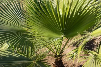 Cute Palm Gardening Ideas For Front Yard 23