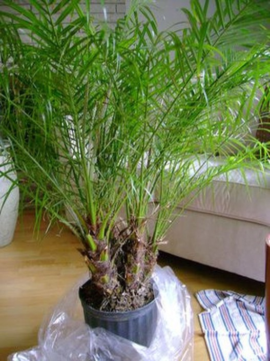 Cute Palm Gardening Ideas For Front Yard 27