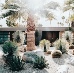 Cute Palm Gardening Ideas For Front Yard 28