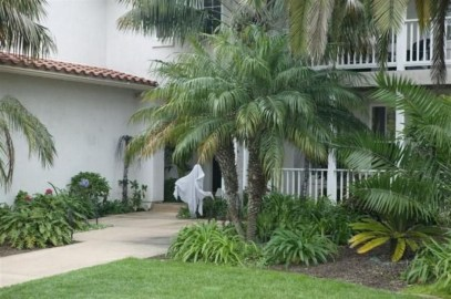 Cute Palm Gardening Ideas For Front Yard 35