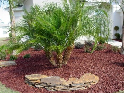 Cute Palm Gardening Ideas For Front Yard 41