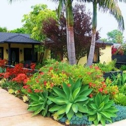 Cute Palm Gardening Ideas For Front Yard 45