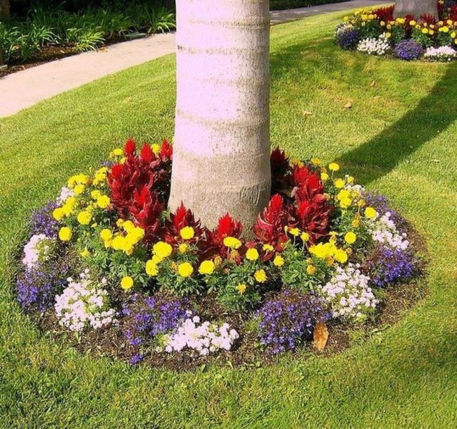 Cute Palm Gardening Ideas For Front Yard 47