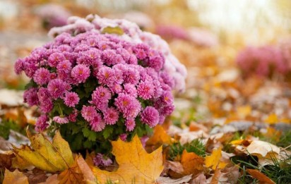 Incredible Autumn Decorating Ideas For Backyard 34