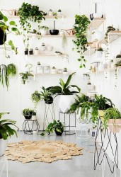 Magnificient Indoor Decorative Ideas With Plants 01