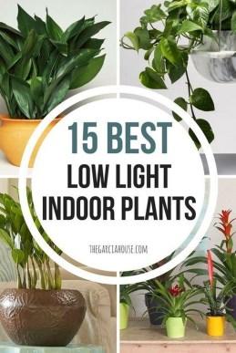 Magnificient Indoor Decorative Ideas With Plants 24