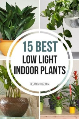 Magnificient Indoor Decorative Ideas With Plants 24