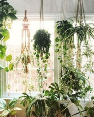 Magnificient Indoor Decorative Ideas With Plants 33