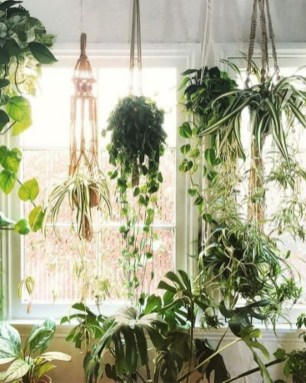 Magnificient Indoor Decorative Ideas With Plants 33