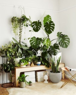 Magnificient Indoor Decorative Ideas With Plants 38