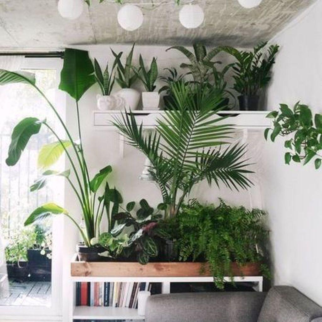 Magnificient Indoor Decorative Ideas With Plants 47