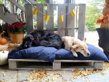 Comfy Diy Backyard Projects Ideas For Your Pets 36