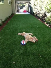 Comfy Diy Backyard Projects Ideas For Your Pets 40