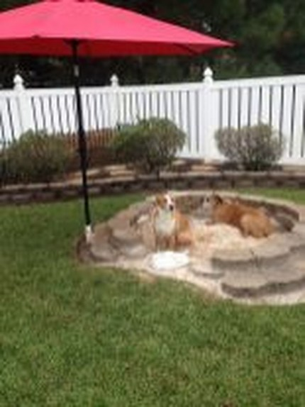 Comfy Diy Backyard Projects Ideas For Your Pets 42