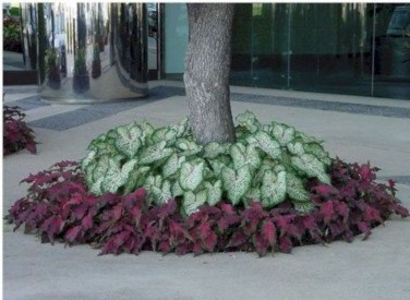Adorable Flower Beds Ideas Around Trees To Beautify Your Yard 01