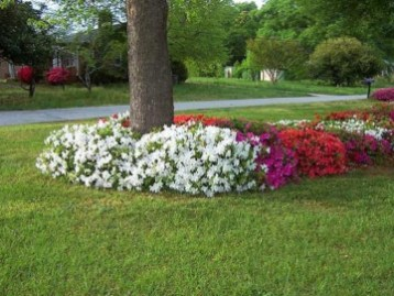 Adorable Flower Beds Ideas Around Trees To Beautify Your Yard 23