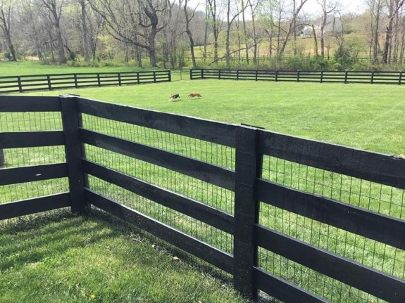 Best Diy Fences And Gates Design Ideas To Showcase Your Yard 31