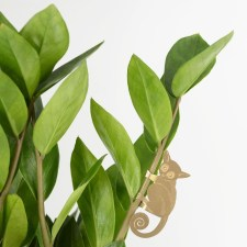 Rustic Houseplants Design Ideas That Are Safe For Animals 20