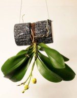 Rustic Houseplants Design Ideas That Are Safe For Animals 22