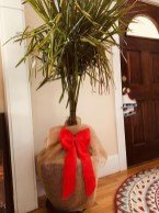 Rustic Houseplants Design Ideas That Are Safe For Animals 44