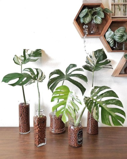 Rustic Houseplants Design Ideas That Are Safe For Animals 47