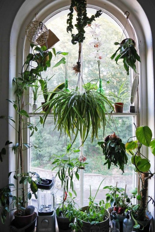 Lovely Window Design Ideas With Plants That Make Your Home Cozy 14