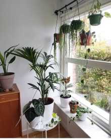 Lovely Window Design Ideas With Plants That Make Your Home Cozy 33
