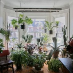 Lovely Window Design Ideas With Plants That Make Your Home Cozy 37