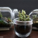 Cool Glass Jars Garden Décor Ideas For Home35