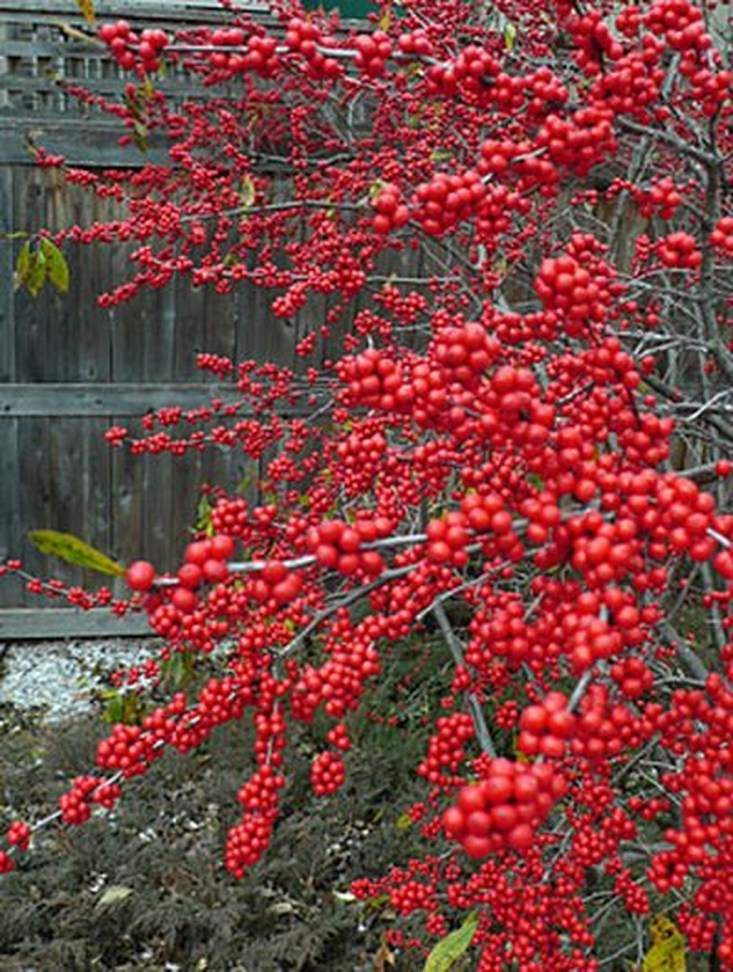 Pretty Landscaping Ideas For Holiday23