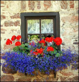 Wonderful Flower In Pots Ideas For Your Window03