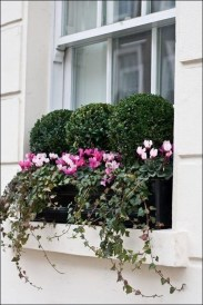 Wonderful Flower In Pots Ideas For Your Window14