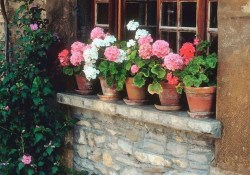 Wonderful Flower In Pots Ideas For Your Window18