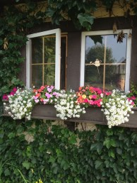 Wonderful Flower In Pots Ideas For Your Window45